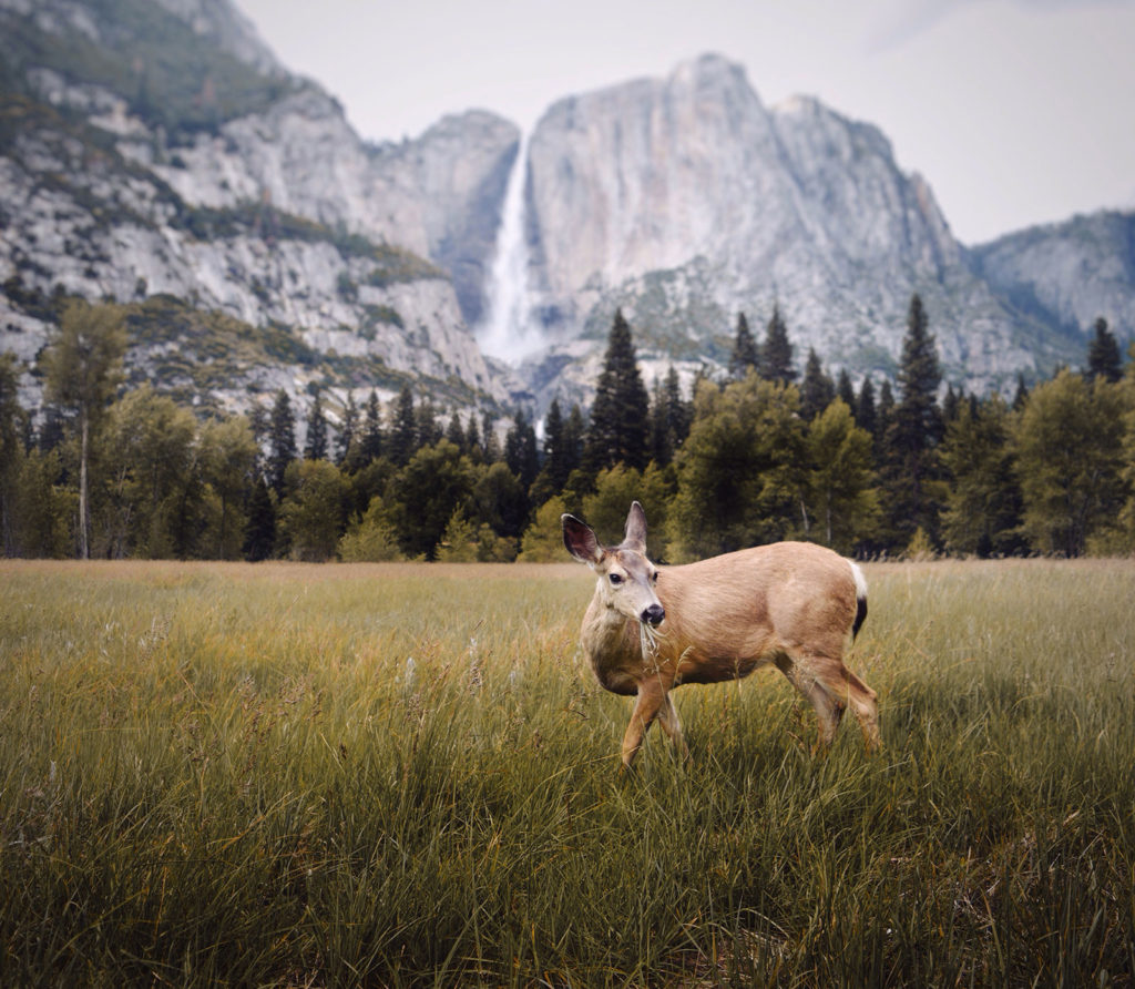 Making Friends in Yosemite